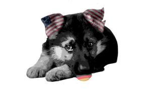 05 12 wikileaks doggy usa germany